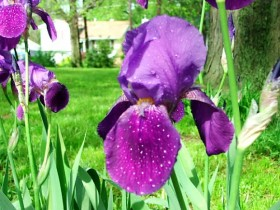 Growth is a process, like growing from a bulb to a beautiful iris